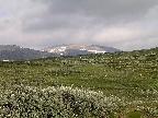 norsko-prestholtskarvet